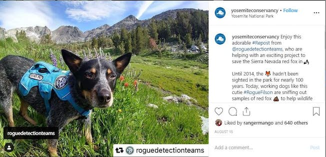 4 Great Examples of User-Generated Content (UGC)